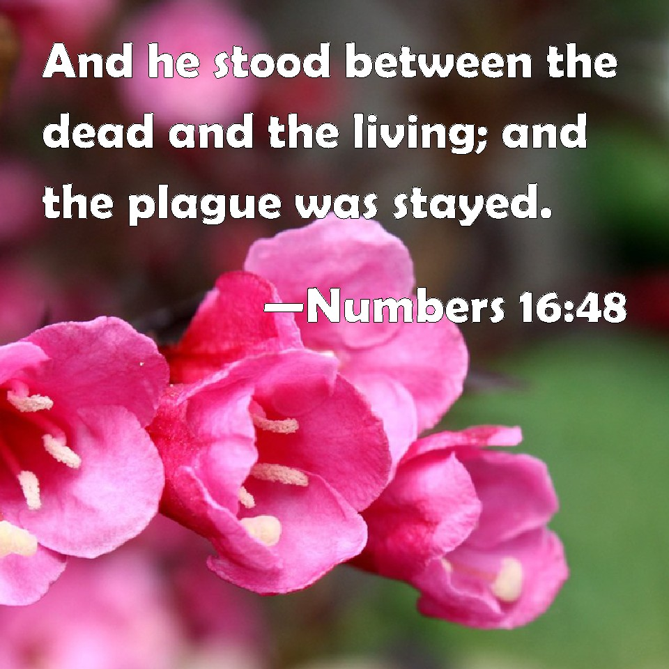 Numbers 16:48 And he stood between the dead and the living; and the plague  was stayed.